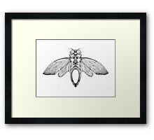 Cicada Bug Wing Illustration Framed Print