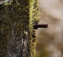 Moss on Fence Post by DevilishImagery