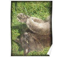 Fluffy Cat on Grass Poster