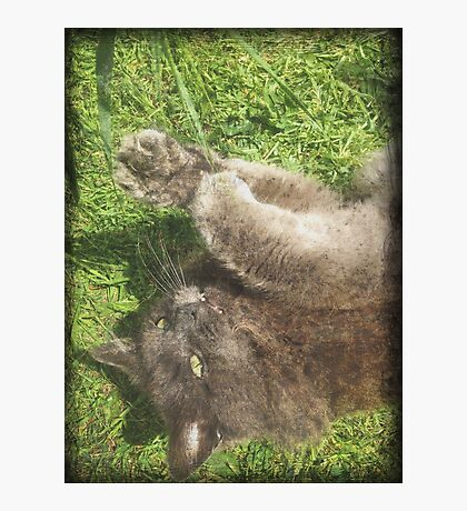 Fluffy Cat on Grass Photographic Print