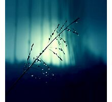 Blue Willow in the rain Photographic Print