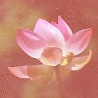 Pink Lotus Flower by tropicalsamuelv