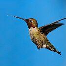 ANNA HUMMINGBIRD by RoseMarie747