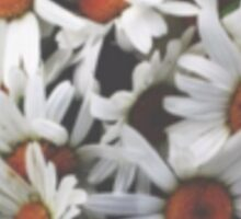 round cut daisies Sticker