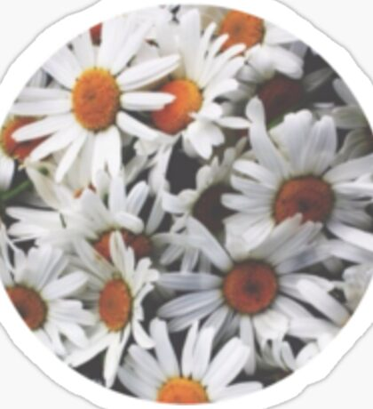 round cut daisies Sticker