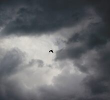 Crow flying in stormy sky by turniptowers
