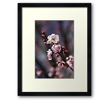 Wonderful Spring  Framed Print