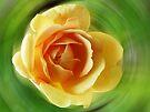 Rose Golden Celebration by Evelyn Laeschke
