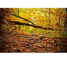 Mysterious Forest - Nature Photography Photographic Print