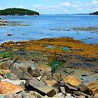 Bar Harbor Coast Line by Karen Jayne Yousse