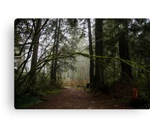 Forest Path in Vancouver's Temperate Rainforest Canvas Print
