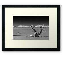 Lonely Tree on a Beach Framed Print