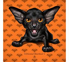 Cataclysm: Oriental Shorthair - Halloween background Photographic Print