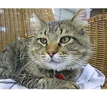 Big Brown Tabby Cat Photographic Print