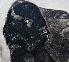 Buffalo Bull licking Wounds  by itchingink