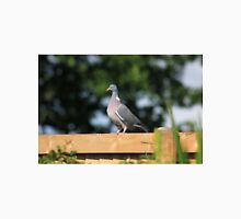Wood pigeon on garden fence Unisex T-Shirt