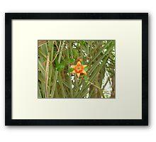 Pomegranate Blossom Framed Print