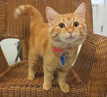 Red Tabby Kitten by Margaret Miller