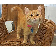 Red Tabby Kitten Photographic Print