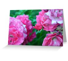 Beautiful gentle pink roses background Greeting Card