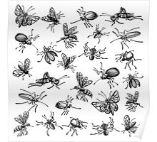 Insects Poster