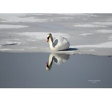 The Narcissistic Swan Photographic Print