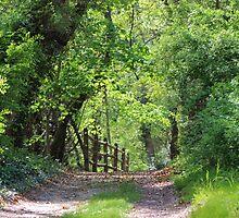 Springtime Stroll on a Country Lane by Gilda Axelrod
