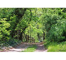Springtime Stroll on a Country Lane Photographic Print