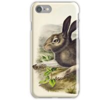 John James Audubon - Lepus gacialis, Leach  Polar Hare  Natural Size 1844  iPhone Case/Skin