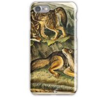 John James Audubon - Canis latrans, Say  Prairie Wolf  Males  1 3 Natural Size1845  iPhone Case/Skin