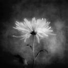 Autumn Mum in Black and White by LouiseK