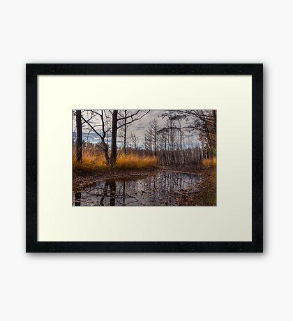 Autumn Swamp Framed Print
