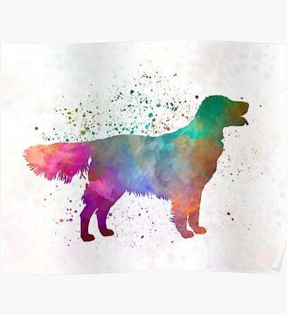 Flat Coated Retriever in watercolor Poster