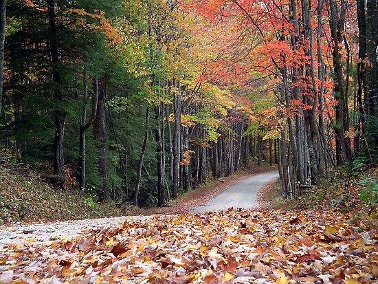 Poga Autumn by Annlynn Ward
