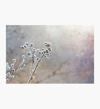 Winter Snow Scene Photographic Print