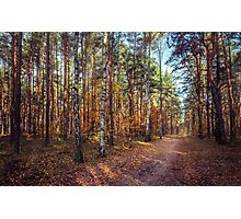 Pathway In The Autumn Forest Photographic Print
