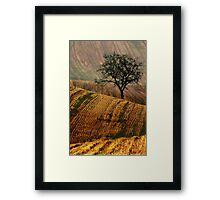 Carpet fields Framed Print