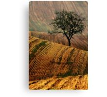 Carpet fields Canvas Print