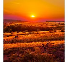Hills Of Gold Photographic Print
