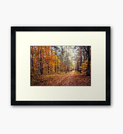 Way Of Light Framed Print