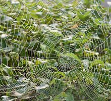 Morning Cobweb by trish725