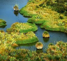 The Swamp..........New Zealand by Imi Koetz