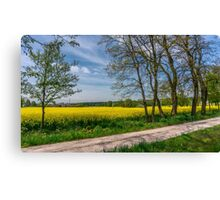 Country Road In The Rapeseed Field Canvas Print