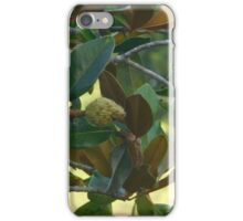 Magnolia Fruit iPhone Case/Skin