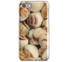 variety of sea shells iPhone Case/Skin