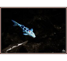 Blue Carp Photographic Print