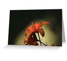 Tiger Lily-  Greeting Card
