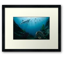 Permian Fishes Framed Print