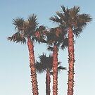 palm tree by helloimbethany