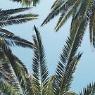 palms by helloimbethany